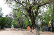 No hubo tala de árboles en Alameda @MunicipioAgs