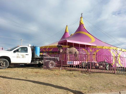 Logra el PVEM prohibición de animales silvestres en circos