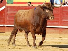 No importa a empresarios taurinos intención de prohibir corridas