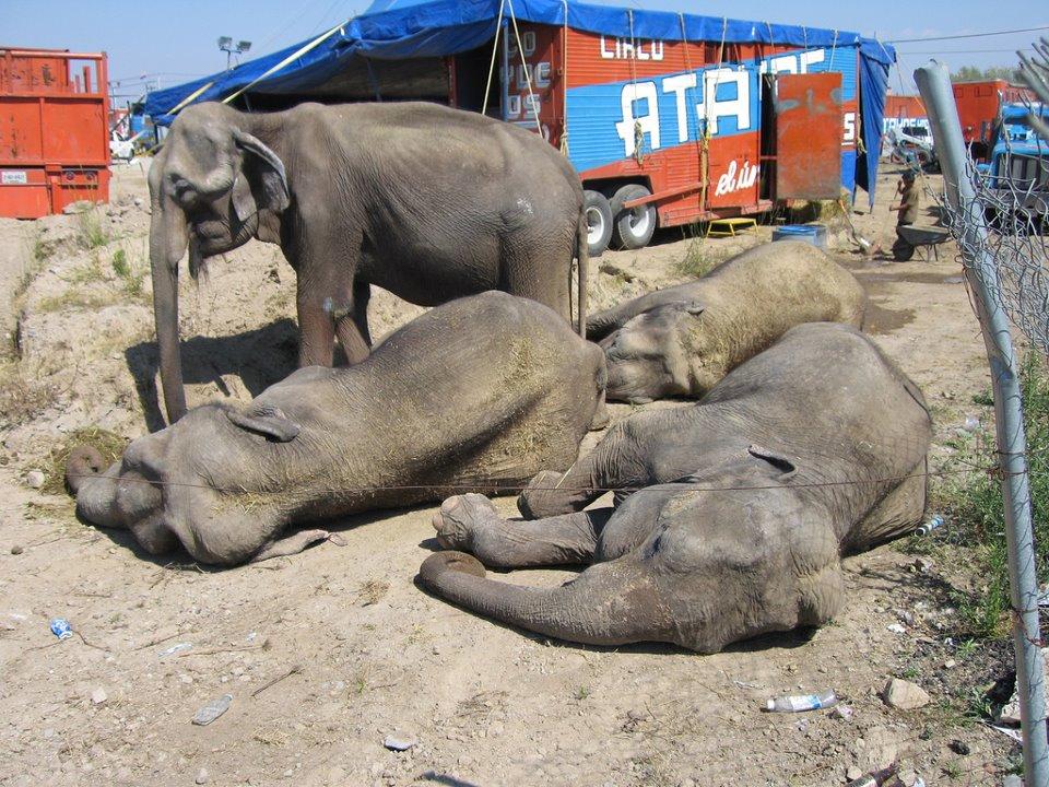 Violan Municipios y Estado Ley de Protección Animal
