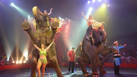 Prohibición de animales en circos es un despojo con saña: Macías