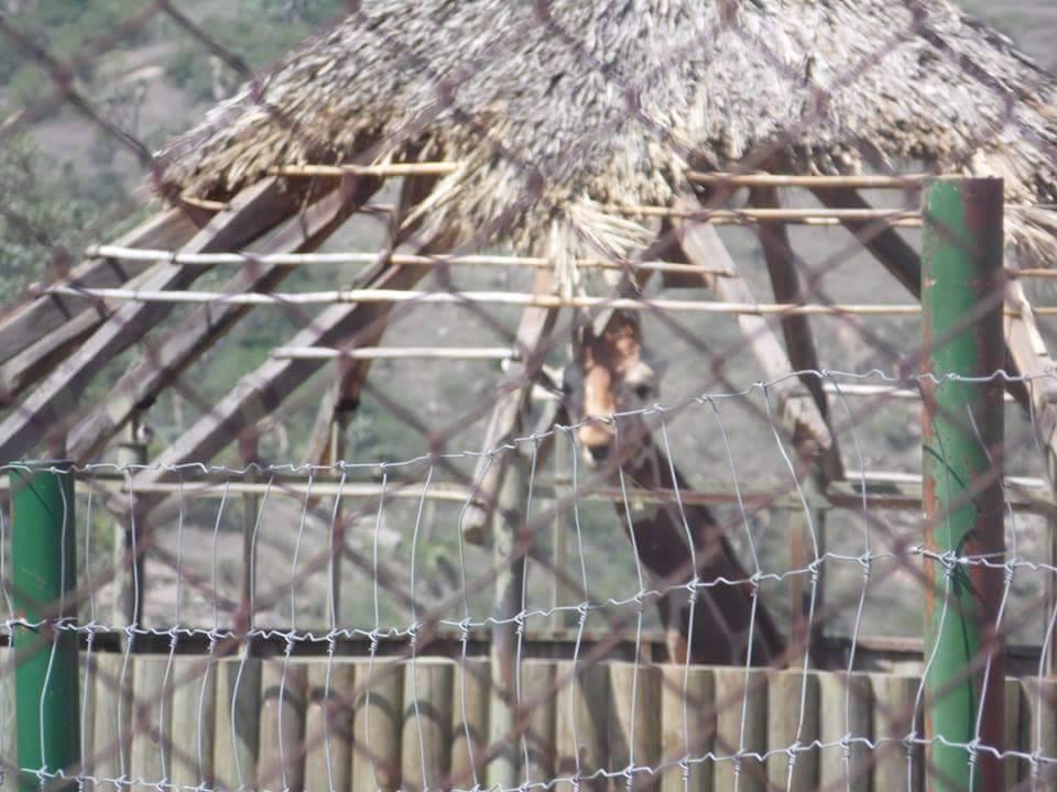 Va SEMARNAT y PROFEPA contra Zoológico con animales clandestinos