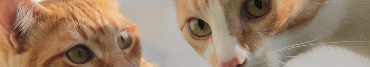 Garantiza @TMartinDelCampo que no habrá multas por no registrar mascotas