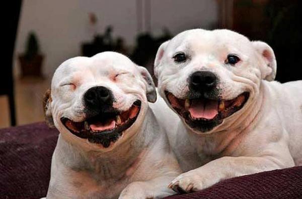 Médicos: Ataques caninos es culpa de propietarios no de la raza