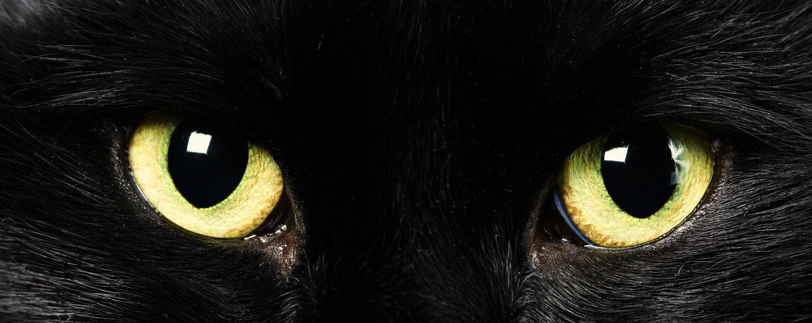 Crece el gusto por gatos negros, sospechan que son para ritos satánicos