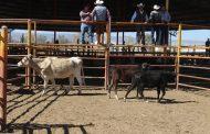 """Propone sector ganadero """"boicot"""" comercial contra Estados Unidos"""