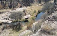Piden a Semarnat revocar permisos en Bosque de Cobos