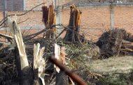 El estado no autorizó la tala en Ojo Caliente