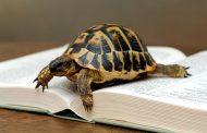 Persiste el tortuguismo en la Junta Local