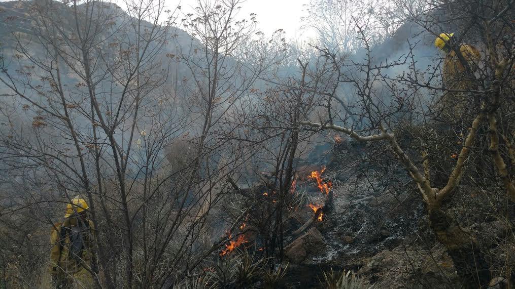 Arrasa incendio con 200 hectáreas del «Picacho»