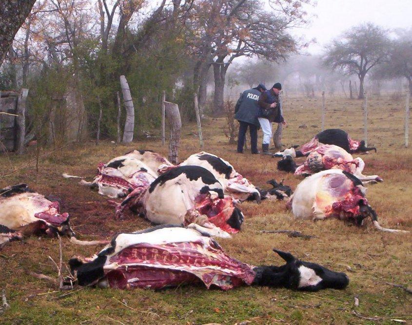 Claman publicación de legislación contra el robo de ganado