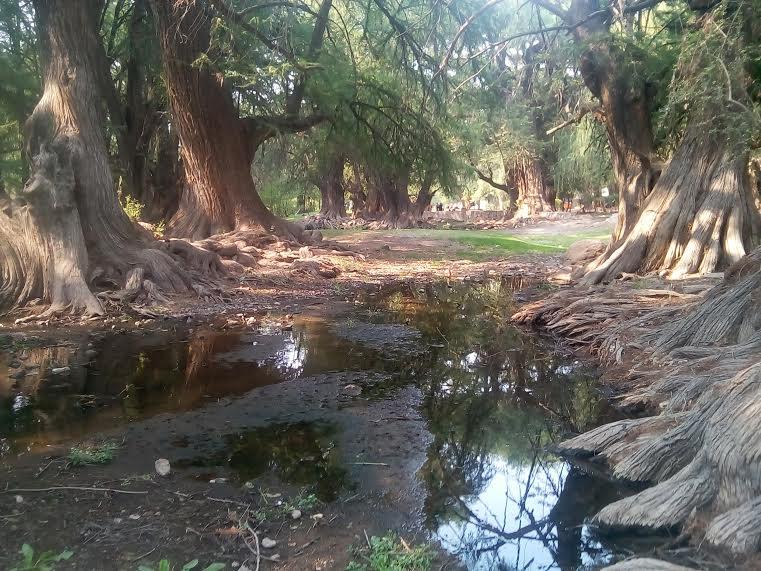 90% del territorio estatal está seco: CNA
