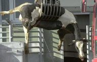 Carne de animales muertos no llega a humanos: UGRH