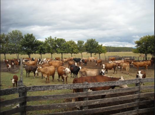 Es ya delito grave en Aguascalientes el robo de ganado y abejas