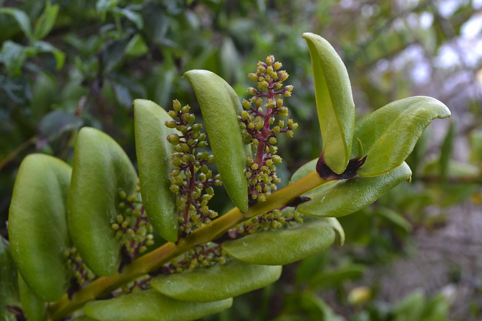 Causan estragos en Calvillo, San José de Gracia y el Llano, plantas epifitas