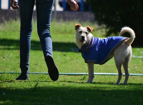 Buscan diputados modificar la ley de protección animal