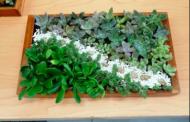 Mujeres de JM aprendieron a realizar artesanías con plantas naturales