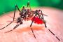 Tiene Aguascalientes 2 casos sospechosos de Dengue  y Zika