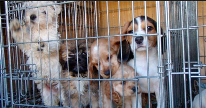Revientan venta clandestina de mascotas en «La Puri» y «La Línea»