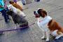Promueve Ayuntamiento  padrón de mascotas