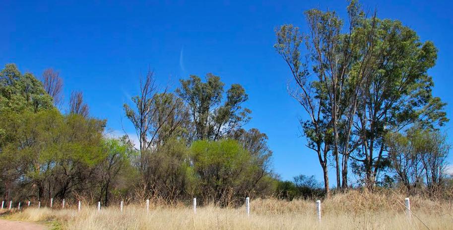 Rescata el Cabildo 11.4 hectáreas de la Mezquitera La Pona