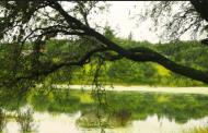 Desarrollo en Bosque de Cobos no se detendrá