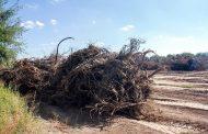 Pide ambientalista a SEMARNAT y PROFEPA atender ecocidio en Tepezalá