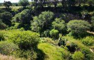 Va Tere Jiménez por el rescate de Bosque de Cobos