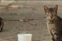 No solo perros, gatos también son maltratados hasta la muerte
