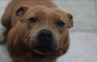 Aplican las primeras multas por maltrato animal en Pabellón de Arteaga