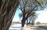 Inicia Pabellón su conversión en Nicho Ecológico del Mezquite