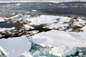8 de cada 10 se dicen preocupados por el cambio climático