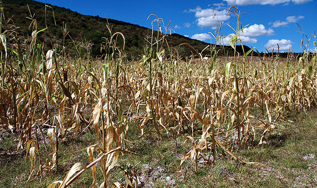 Busca SEDRAE seguro para afectaciones por sequía en Aguascalientes