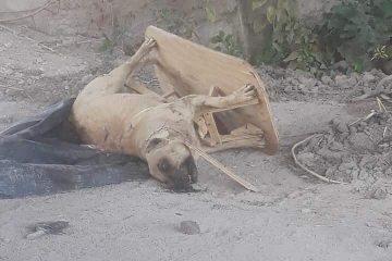 Reaparece el mata perros de Rincón de Romos